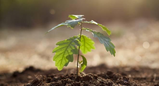 Biodiversity Net Gain (BNG) Trading